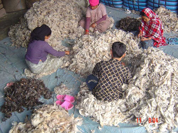 2.	WE TAKE COTTON FROM THE COTTON PLANT TO SPIN OUR YARN